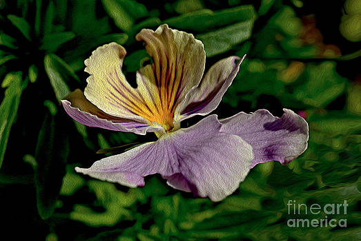 Pansy Flower by Nur Roy