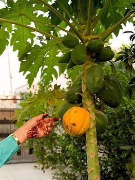 Devinder Sangha - Papaya