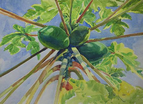 Papaya by Helal Uddin
