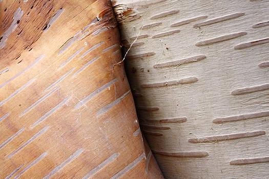 Scott Leslie - Paper Birch Bark