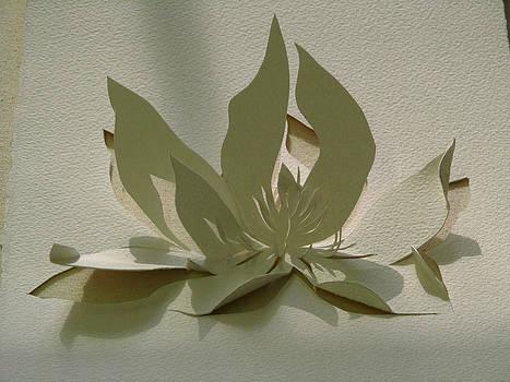 Alfred Ng - paper magnolia