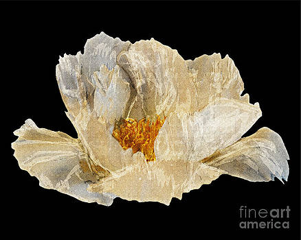 Paper Peony by Diane E Berry