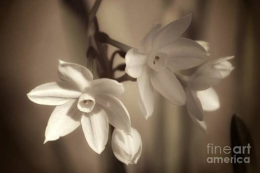 Paper White by Anne Pendred