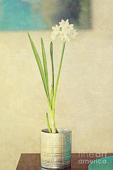 Paper Whites on Table by Susan Gary