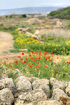 Fizzy Image - paphos cyprus