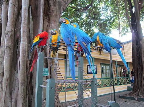 Papugi by Bozena Happach