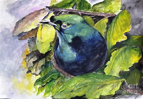 Jason Sentuf - Paradise Bird