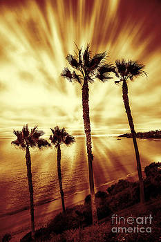 Paradise on the beach by Linda MatlowFour Palm trees red gold sunset on beach light rays