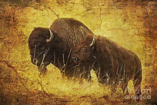 Parent and Child - American Bison by Lianne Schneider