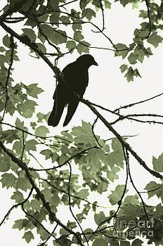 Gwyn Newcombe - Park Crow