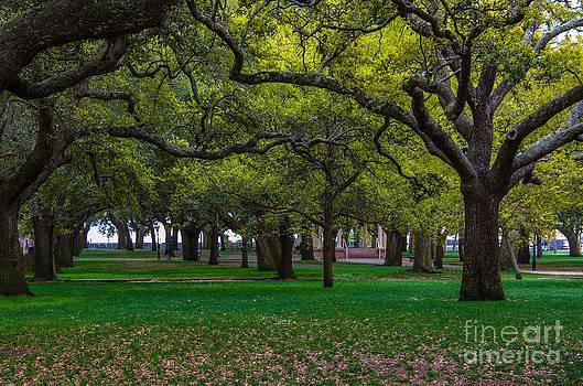 Dale Powell - Park View