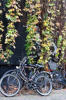 Parked Bikes and Fall Vines by Julia Willard