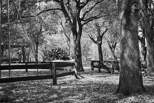 Parks by Jose Mena
