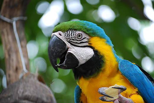 Parrot by Arylana Art