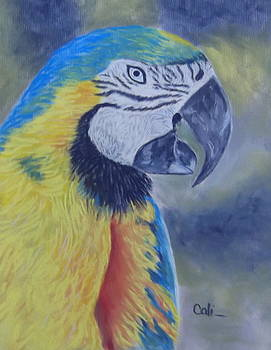 Parrot by Calliope Thomas