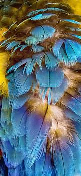 Parrot Feathers by Dorin Stef