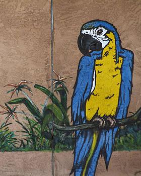 Guy Shultz - Parrot