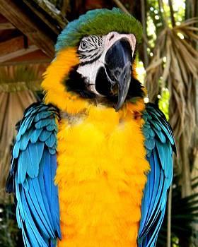 Parrot II by Bruce Kessler