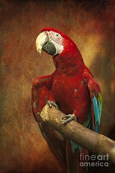 Parrot by Izabela Kaminska
