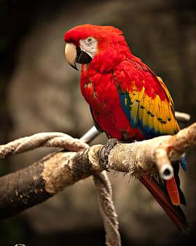 Parrot by Kerri Garrison