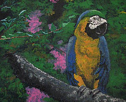 Parrot by Megan Hughes