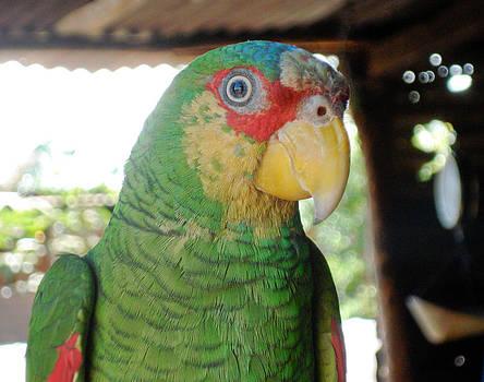 Skarleth - Parrot