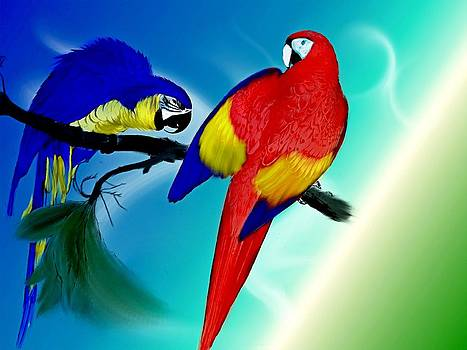 Parrots By Two by Amanda Struz