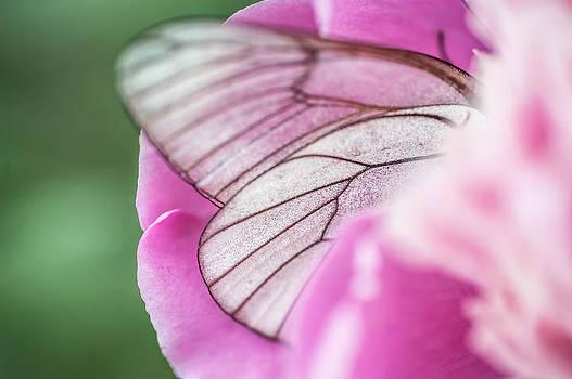 Jenny Rainbow - Part of Flower 1