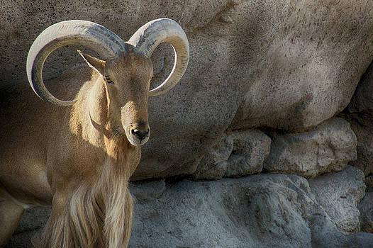 Munir El Kadi - Part of the Natural Surrounding