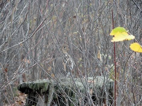 Partridge On A Stump by Jody Benolken