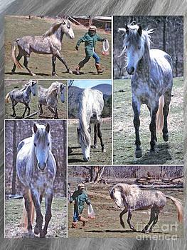 Paso Fino Stallion Horsing Around by Patricia Keller
