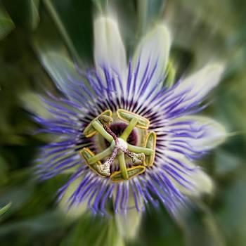 Passion flower by Esther Branderhorst