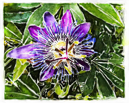 Nato  Gomes - Passion fruit flower