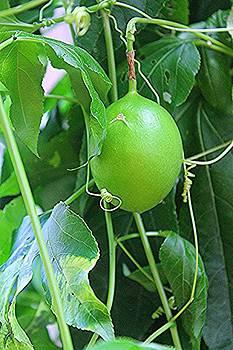 Passion Fruit by Sarah E Kohara