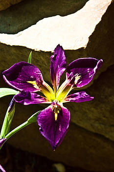Joe Bledsoe - Passion is Purple
