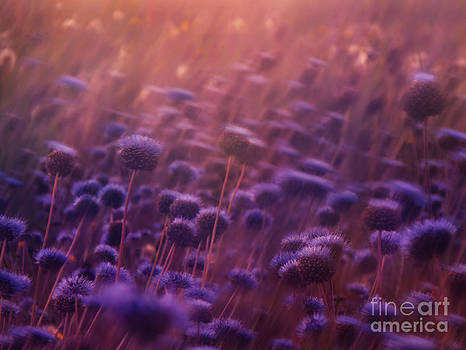 Passion of summer by Monika Pachecka