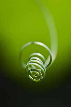 Passionflower Tendril by Steven Schwartzman