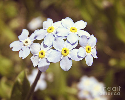 Pastel Blue Flowers by Emily Kelley