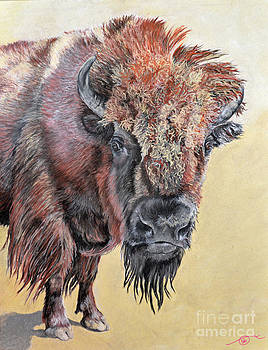Pastel Buffalo Stare by Ann Marie Chaffin