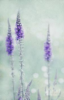 Svetlana Sewell - Pastel Colors
