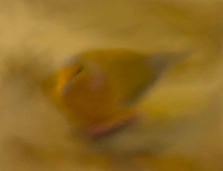 Pastel Illusion by Catherine Renzini