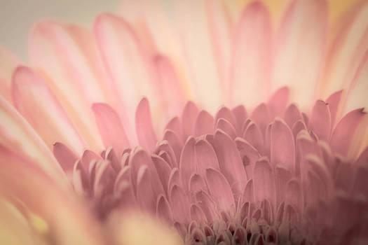 Roger Mullenhour - Pastel Petals