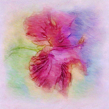 Pastel Pink Hibiscus by Jill Balsam