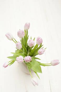 Anne Gilbert - Pastel Pink Tulips