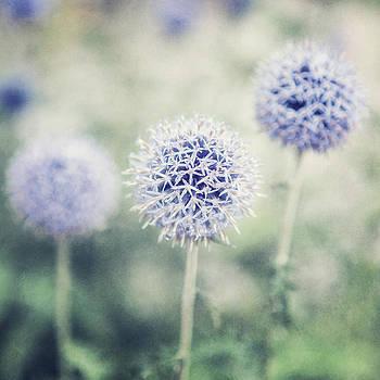 Lisa Russo - Pastel Purple Allium Bulbs