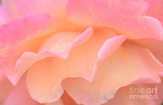 Pastel Ruffles by Kathleen Struckle