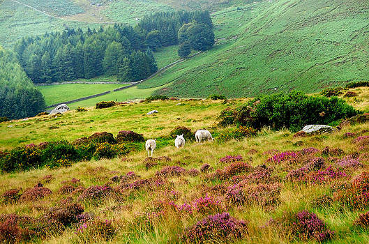 Jenny Rainbow - Pastoral Scene. Wicklow. Ireland