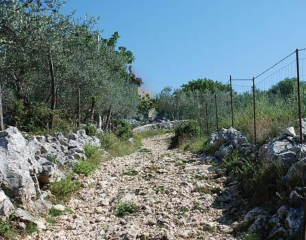Path among olive trees by Dany Lison