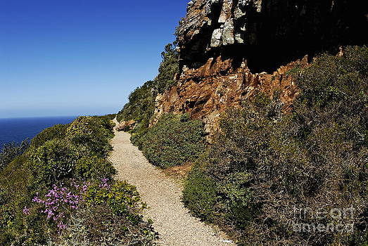 Path at Cape of Good Hope by Sami Sarkis