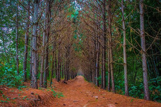 Path in the Forest by Fabio Giannini